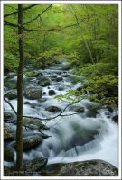Spring Waters on Tremont by TRBPhotographyLLC