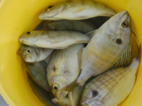 Free Stock A Bucket of Fish by Whatsome