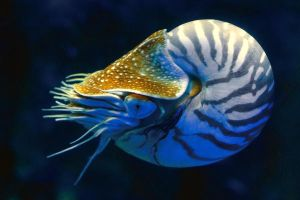 Nautilus by Shooter1970