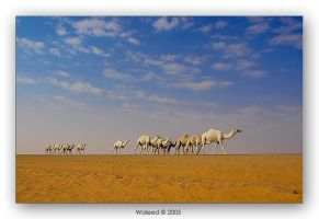 Travelling by waleed-DP