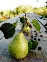 Pears by piticus41