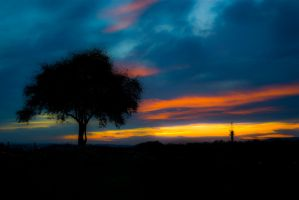 Lonely tree by photo-exile