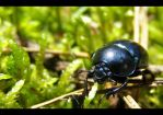 My Name is Beetle by AnimalsAndNatureClub