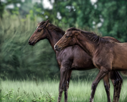 Two Foals by stalit