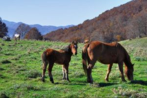 the foal's family - HDR by yoctox