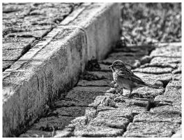 One step at a time by Misantropia
