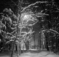 Night snow bw park by voldemometr