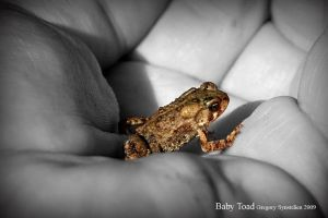 Baby Toad 2009 by UffdaGreg