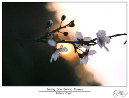 Setting Sun Behind Flowers by uber-monkey
