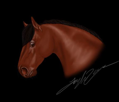 Horse Drawing by TayMay135