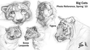 Animal Sketchbook: Big Cats 01 by 89ravenclaw
