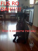 My Dog Onyx by KeeperNovaIce