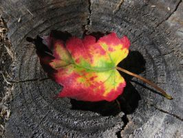 Magical Multicolored Leaf by idolminds