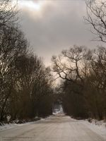 Wintry Drive by rici66