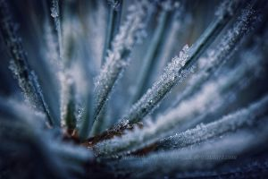 frost II by stitches-itch
