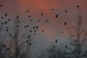 The birds are flying by Lizzimoa