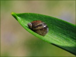 Snail pace by WaitingForTheWorms