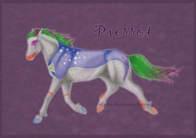 CH Pierrot by Everland-Stables