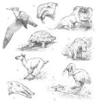 Miocene fauna sketches by Apsaravis