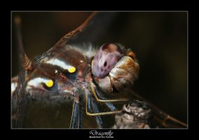 Dragonfly by livinginoblivion