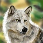 Wolf by mashed-banana