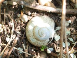 Lost home: Snail shell - Schneckenhaus by SusuSketches