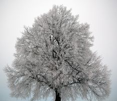 Cold winter morning by luethy