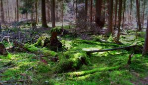 Moss forest by georgmaxklein