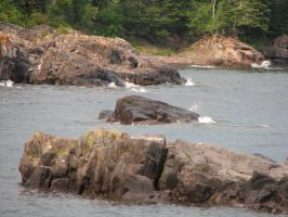 Typical North Shore Rocks by calebrw