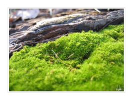 Mossy Green by NEME5IS