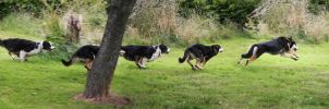 Two Running Dogs by Photoburner