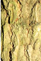 Tree Bark 117_quaddles by quaddles
