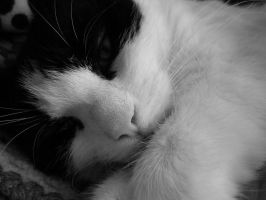 Cat - Black and White by Gumbo210