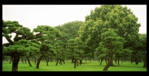 Tokyo Trees by psychogizmo