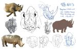 Rhino study by Suzanne-Helmigh