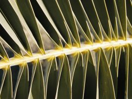 Another Palm Frond Macro by winterface