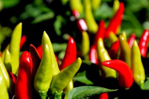 Chillies by EvershiningHope