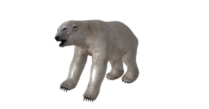 POLAR BEAR ORIGINAL BONES by Oo-FiL-oO