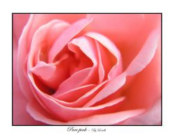 Pure pink by lexidh