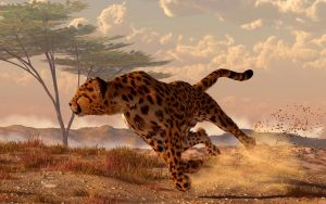 Speeding Cheetah by deskridge