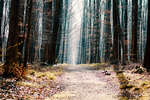 Follow the path by wouter-vph