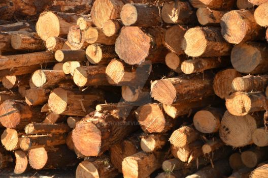 Timber by Johvic