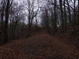 Oechsenberg - forest 4 by sacral-stock