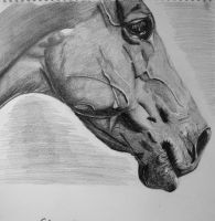 horse by MoreLife