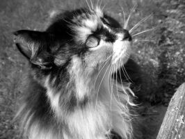 Kitty Cat 2 by musicismylife2010