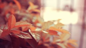 pink leaves by demor