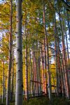 First light in the Aspens by krakpics