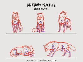 Anatomy practice 2 by ar-sonist