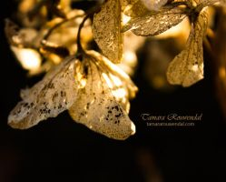 The Home of Fairies by TammyPhotography
