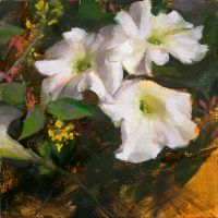 White Petunias by thienbao